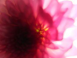 flor-4