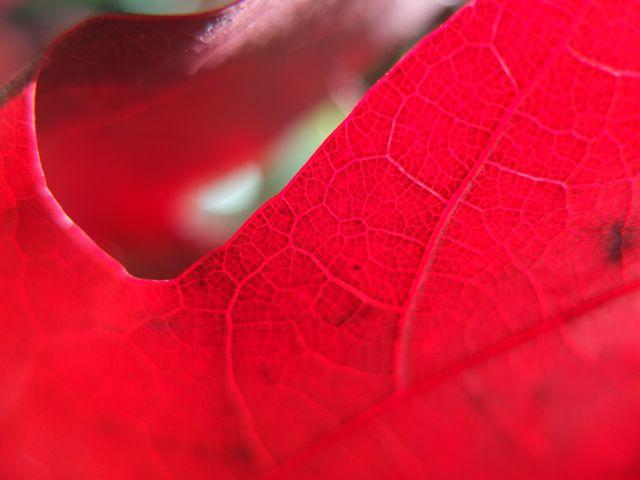 rojo-3