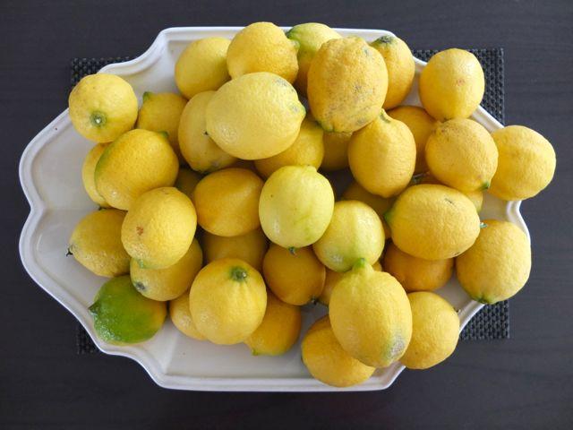 Dènia-limones