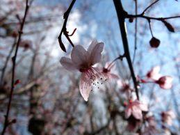 primavera-1