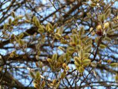 primavera-5