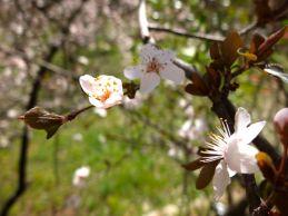 primavera-blanca2