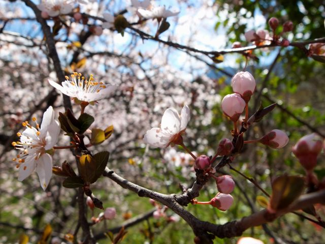 primavera-enredo