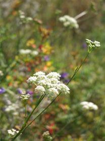 botànic de Tuixent