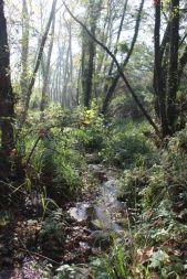 Riera de Vallforners, a Cànoves